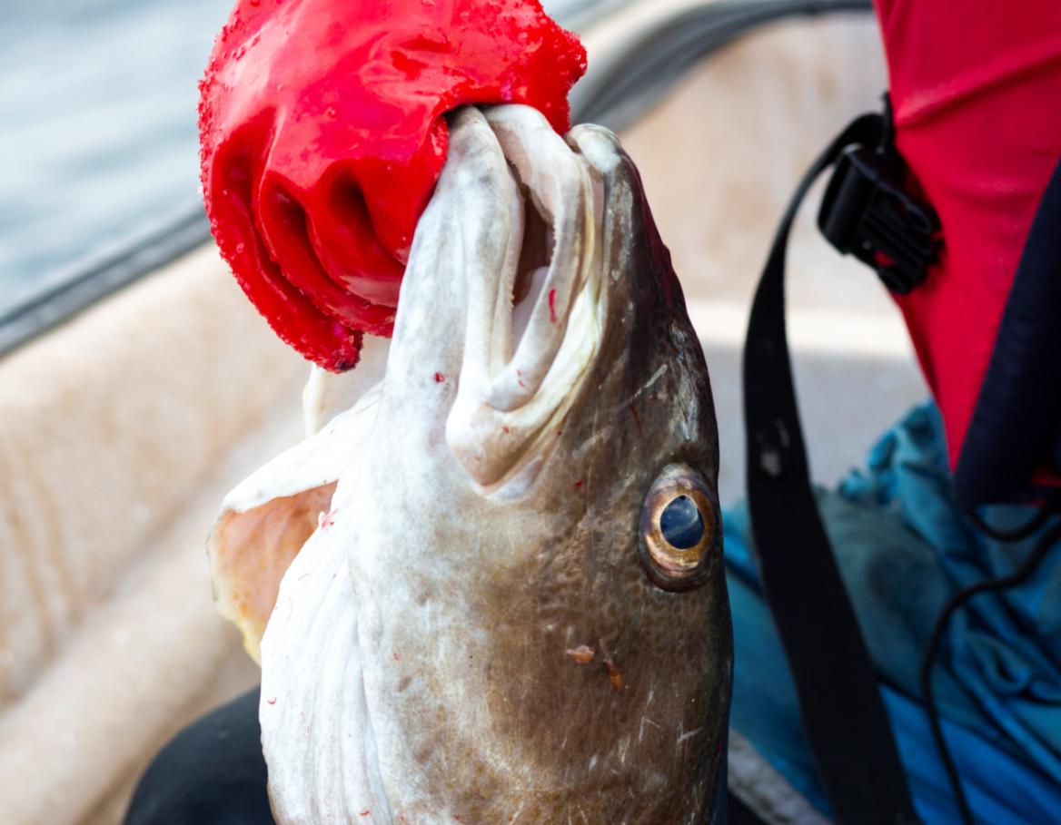 Fiskrestraastoff